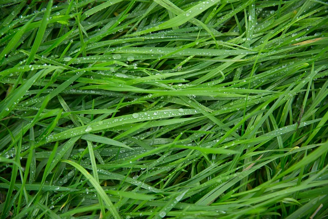 eco friendly dry cleaners grass